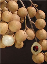 Typical Kohala Longan Fruit