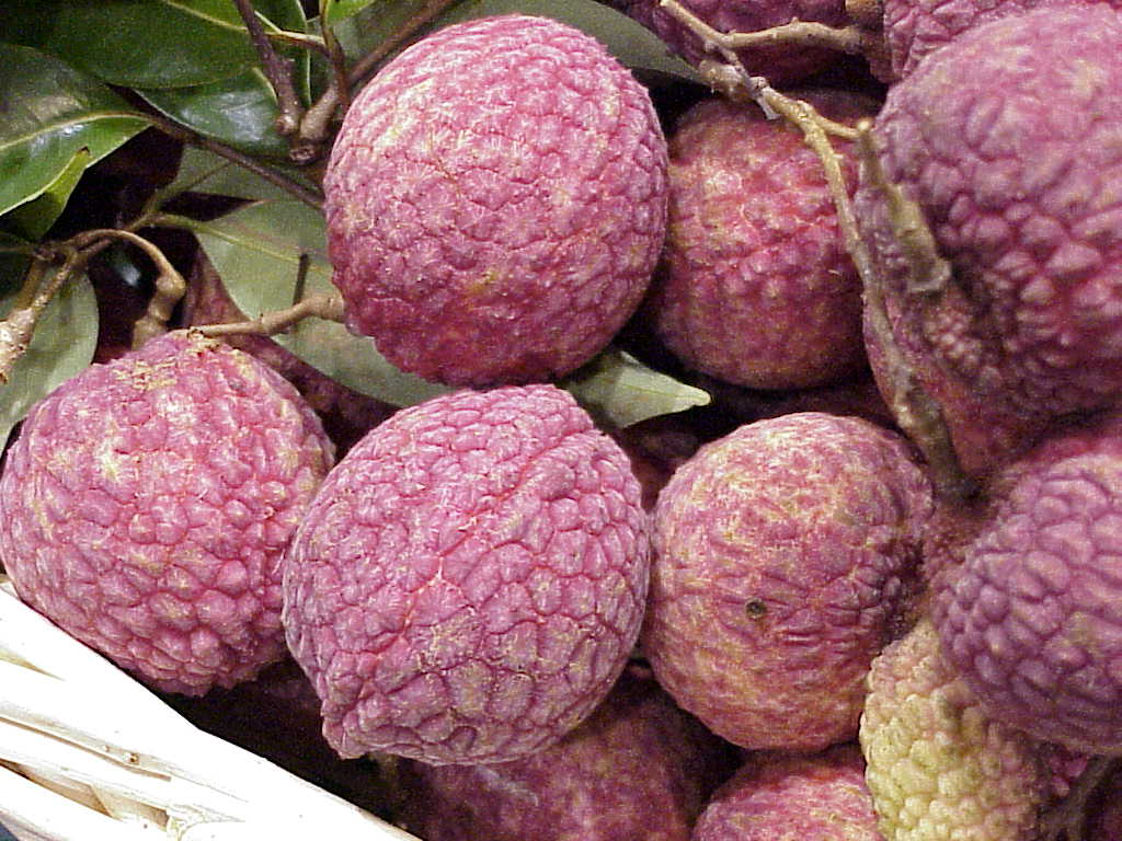 lychees online  lychee fruit, trees, products  info, Beautiful flower