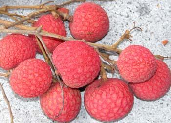 Kaimana Lychee Fruit Cluster